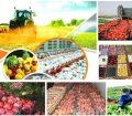 موانع صادرات محصولات کشاورزی!