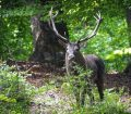 محیط زیست مازندران اعلام کرد: تعیین جنگل های هیرکانی شمال به عنوان مناطق ممنوعه شکار